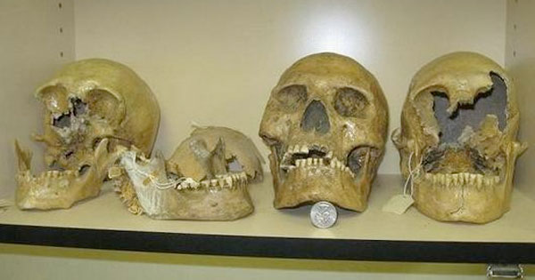 Smithsonian admits to destroying GIANT HUMAN Skeletons?