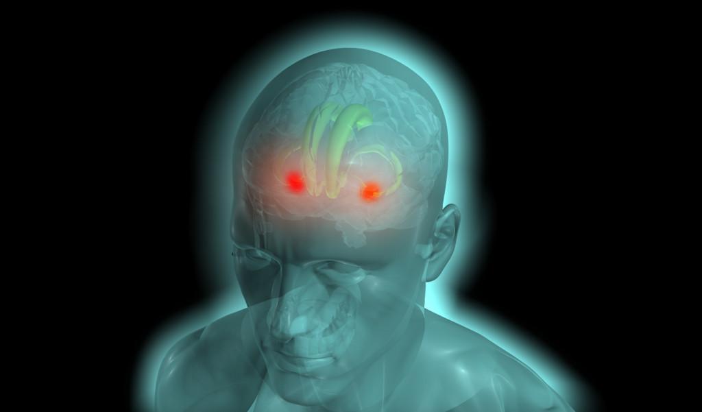 brain emotions parts