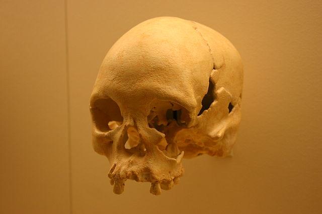640px-Lapa_Vermelha_IV_Hominid_1-Homo_Sapiens_11,500_Years_Old