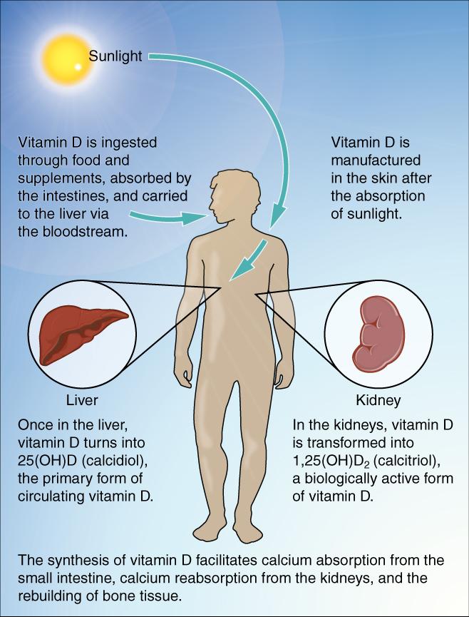 vitamin d sunlight